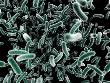 FOTO: Bakterie