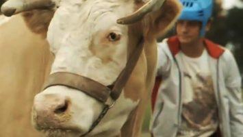 FOTO: Kráva