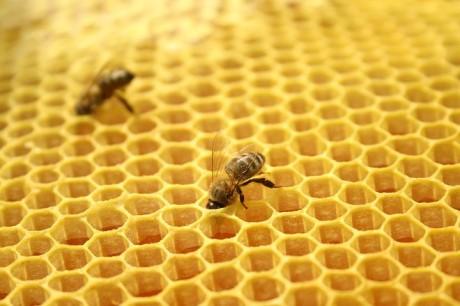FOTO: Včely v plástvích