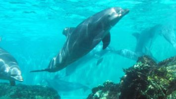 FOTO: Delfíni