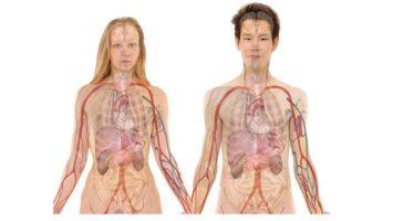 jak se dostat na medicinu anatomie